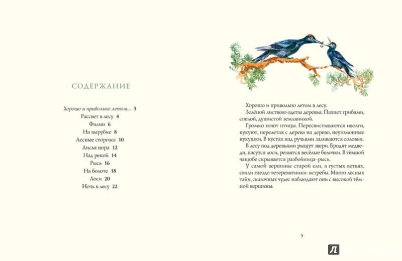 Иллюстрация 1 из 11 для Лето в лесу - Иван Соколов-Микитов | Лабиринт - книги. Источник: Лабиринт