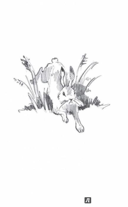 Иллюстрация 1 из 14 для О смешных зайчиках - Бианки, Сладков, Пришвин | Лабиринт - книги. Источник: Лабиринт