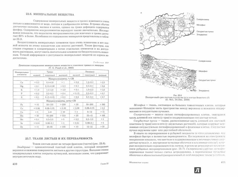 Иллюстрация 1 из 15 для Основы питания и кормления сельскохозяйственных животных - Виктор Рядчиков   Лабиринт - книги. Источник: Лабиринт