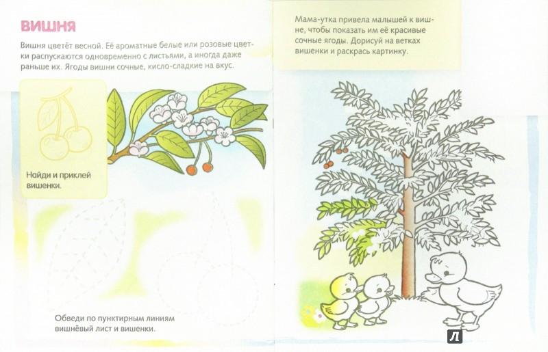 Иллюстрация 1 из 17 для Деревья и плоды | Лабиринт - книги. Источник: Лабиринт