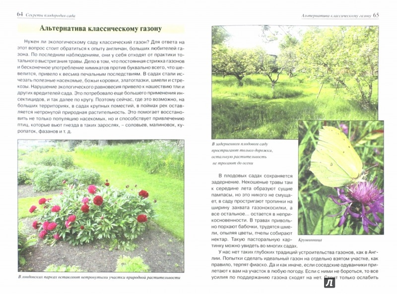 Иллюстрация 1 из 6 для Секреты плодородия сада - Наталья Гнатовская | Лабиринт - книги. Источник: Лабиринт