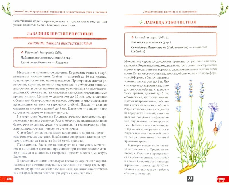 Иллюстрация 1 из 8 для Большой иллюстрированный справочник лекарственных трав и растений - Игорь Гречаный   Лабиринт - книги. Источник: Лабиринт