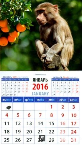 Иллюстрация 1 из 3 для Календарь на магните на 2016 год. Год обезьяны. Маленький павиан (20626) | Лабиринт - сувениры. Источник: Лабиринт