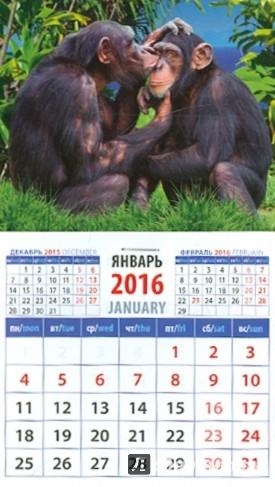 Иллюстрация 1 из 2 для Календарь на магните 2016. Год обезьяны. Два шимпанзе (20633) | Лабиринт - сувениры. Источник: Лабиринт