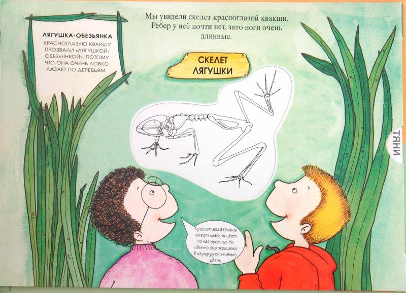 Иллюстрация 1 из 13 для Животные тропического леса. Магические скелеты   Лабиринт - книги. Источник: Лабиринт