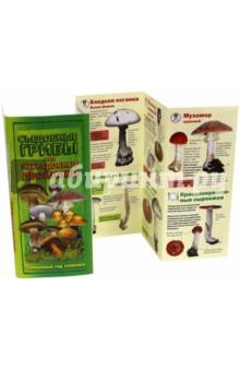 Съедобные грибы и их несъедобные двойники. Карманный гид грибника