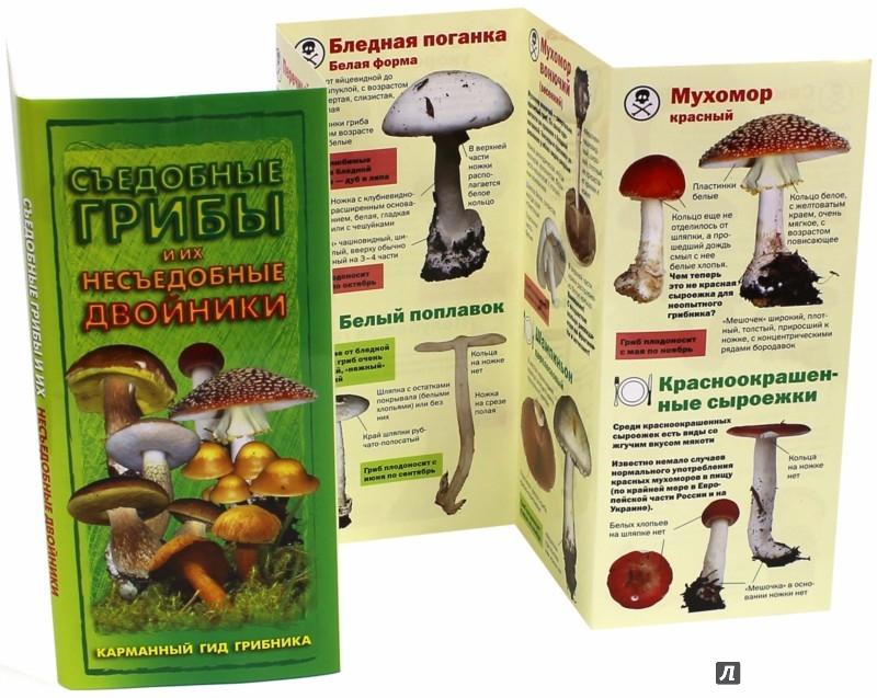 Иллюстрация 1 из 3 для Съедобные грибы и их несъедобные двойники. Карманный гид грибника - Михаил Вишневский | Лабиринт - книги. Источник: Лабиринт
