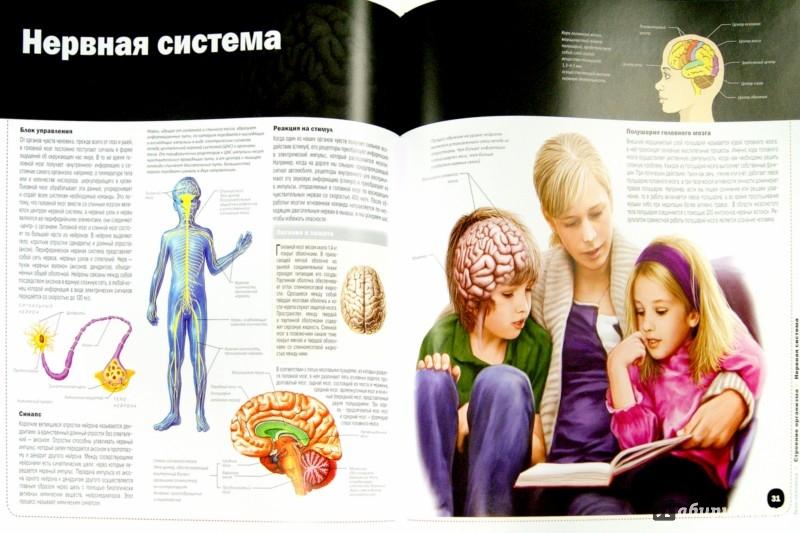 Иллюстрация 1 из 2 для Тело человека | Лабиринт - книги. Источник: Лабиринт