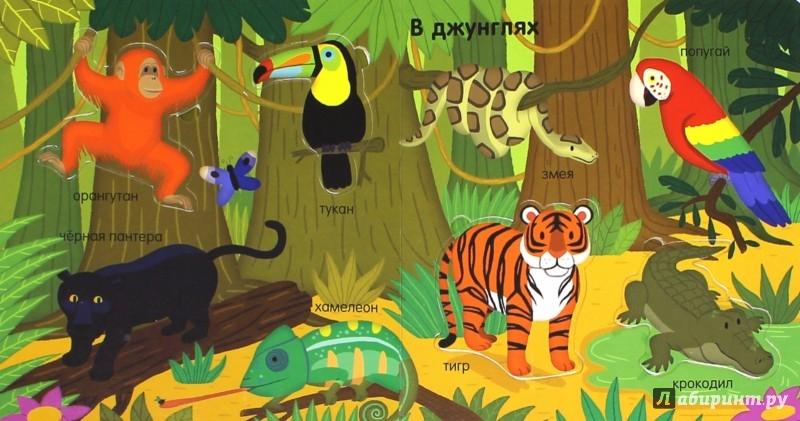 Иллюстрация 1 из 10 для Животные | Лабиринт - книги. Источник: Лабиринт