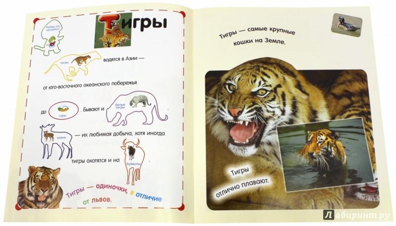 Иллюстрация 1 из 37 для Читай, играй, наклеивай. Хищные кошки | Лабиринт - книги. Источник: Лабиринт