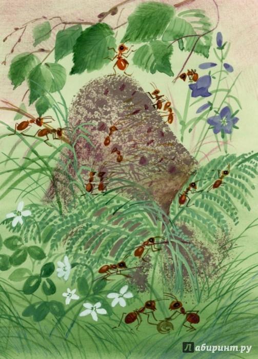 Иллюстрация 1 из 34 для Как муравьишка домой спешил - Виталий Бианки | Лабиринт - книги. Источник: Лабиринт