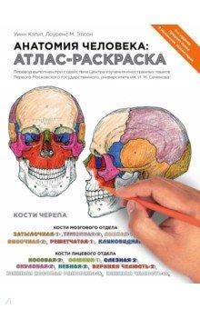 Анатомия человека. Атлас-раскраска анатомия человека атлас