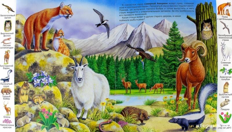 Иллюстрация 1 из 23 для Животные и растения гор | Лабиринт - книги. Источник: Лабиринт