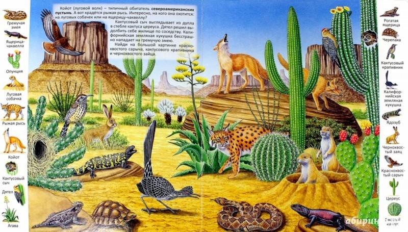 Иллюстрация 1 из 23 для Животные и растения пустыни | Лабиринт - книги. Источник: Лабиринт