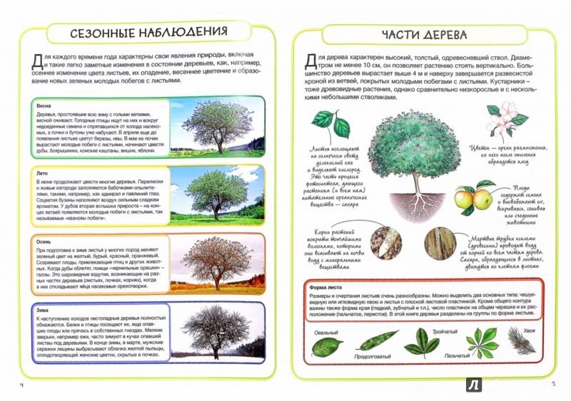 Иллюстрация 1 из 23 для Деревья - Бедуайер Камилла де ла | Лабиринт - книги. Источник: Лабиринт