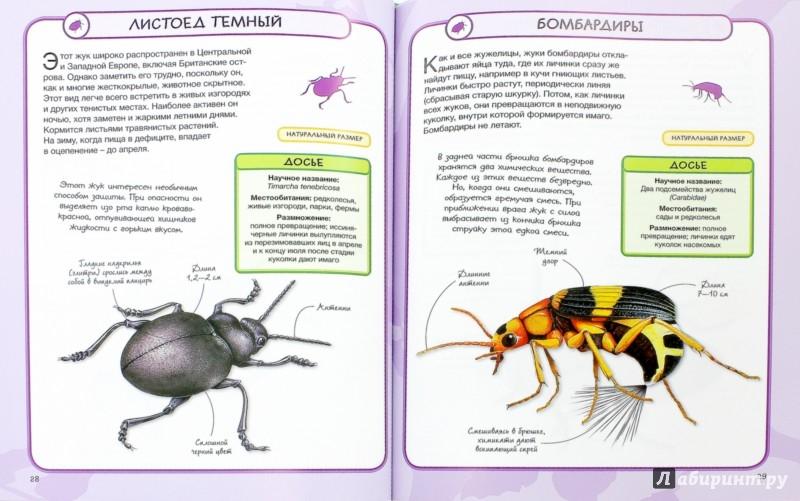 Иллюстрация 1 из 37 для Насекомые - Бедуайер Камилла де ла | Лабиринт - книги. Источник: Лабиринт