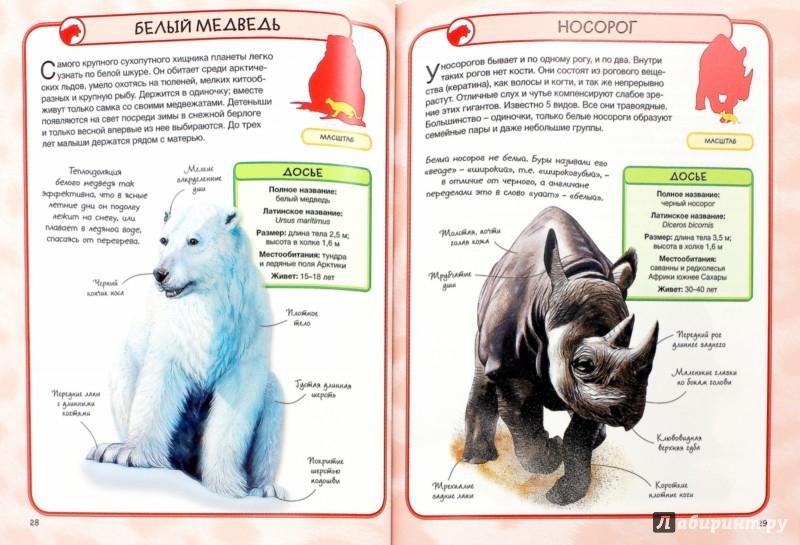 Иллюстрация 1 из 20 для Дикие животные - Салли Морган | Лабиринт - книги. Источник: Лабиринт