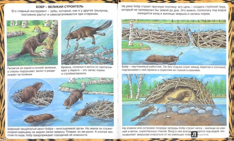 Иллюстрация 1 из 34 для Животные-рекордсмены - Эмили Бомон | Лабиринт - книги. Источник: Лабиринт