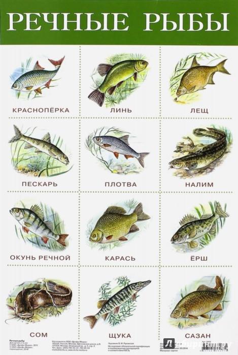 речные рыбы россии фото с названиями
