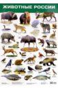Животные России. Демонстрационный плакат (2986) цена