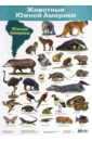 Животные Южной Америки. Демонстрационный плакат (2882) цена