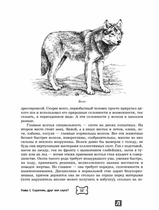 Иллюстрация 12 из 31 для Собака. Полное руководство по дрессировке и уходу - Алексей Целлариус | Лабиринт - книги. Источник: Лабиринт