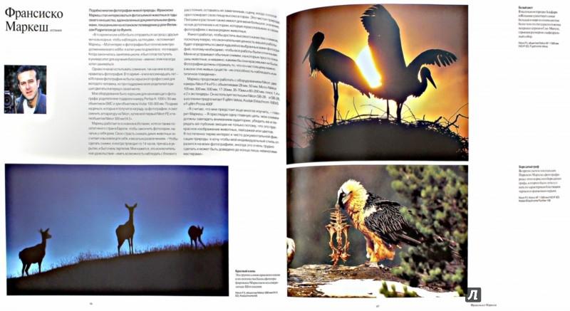 Иллюстрация 1 из 28 для Живая природа. Лучшие фотографы мира и их истории, оставшиеся за кадром - Терри Хоуп | Лабиринт - книги. Источник: Лабиринт