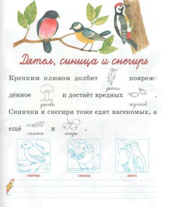 Иллюстрация 1 из 10 для Птицы и насекомые - Александрова, Дроздова | Лабиринт - книги. Источник: Лабиринт