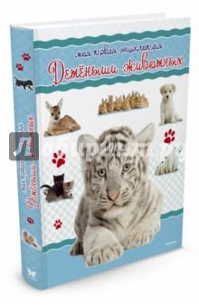 Детёныши животных. Моя первая энциклопедия бологова в моя большая книга о животных 1000 фотографий
