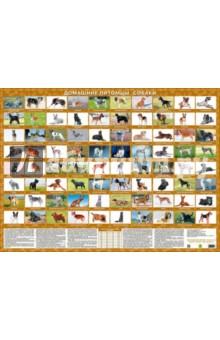 Домашние питомцы. Собаки. Настольное издание отечественные автомобили настольное издание