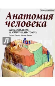 Анатомия человека. Цветной атлас и учебник анатомии анна спектор большой иллюстрированный атлас анатомии человека