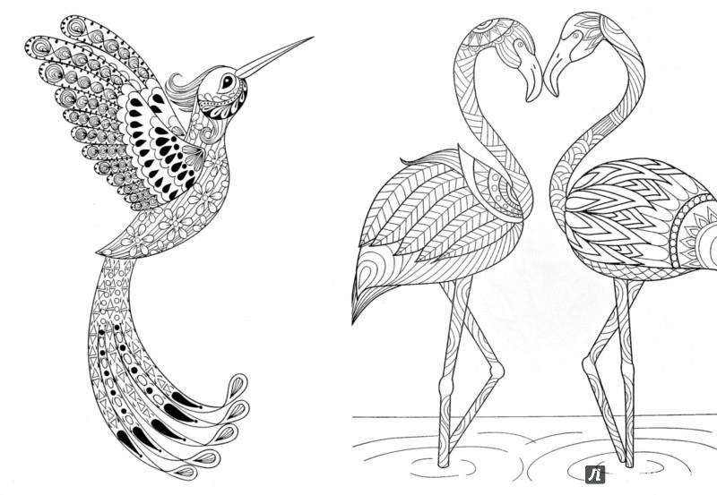 Kleurplaat Paarden Halster Иллюстрация 1 из 24 для Птички певчие Раскраска для