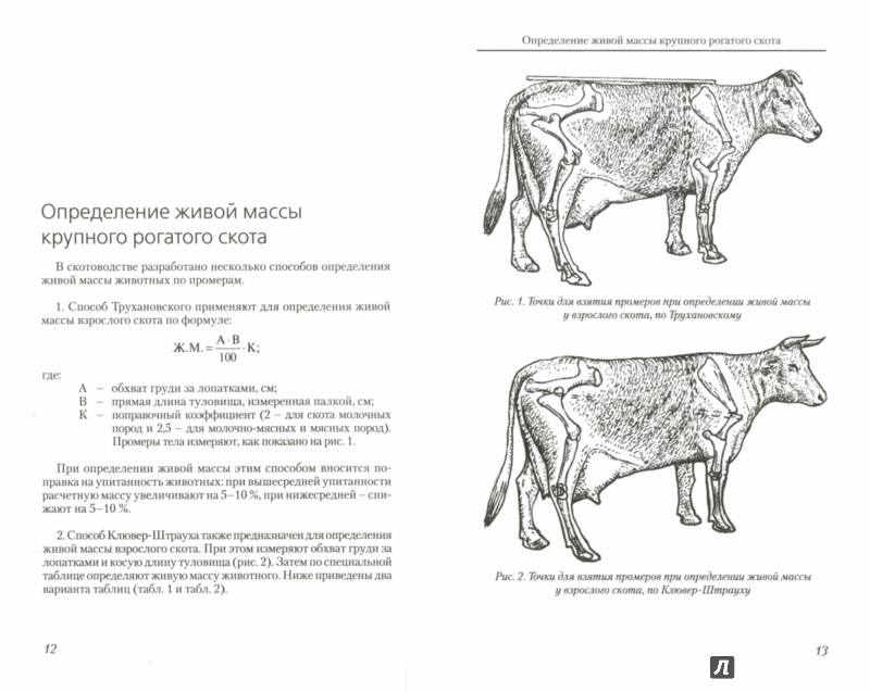 Иллюстрация 1 из 6 для Определение живой массы сельскохозяйственных животных по промерам - Егор Лебедько | Лабиринт - книги. Источник: Лабиринт