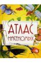 Атлас насекомых, Тихонов Александр Анатольевич
