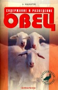 Содержание и разведение овец