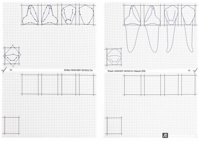 Иллюстрация 1 из 2 для Схематичное изображение контуров зубов. Рабочая тетрадь - Арутюнов, Даов | Лабиринт - книги. Источник: Лабиринт