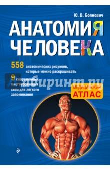 Анатомия человека со страницами для раскрашивания анатомия человека русско латинский атлас