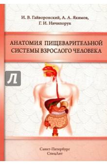 Анатомия пищеварительной системы взрослого человека а а никитина анатомия человека