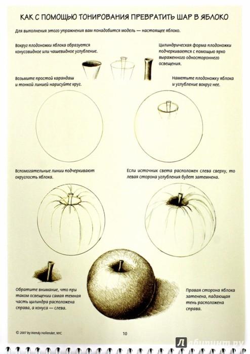 Иллюстрация 1 из 13 для Ботаническая иллюстрация. Обучающий скетчбук - Венди Холендер | Лабиринт - книги. Источник: Лабиринт