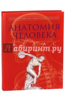 Анатомия человека. Атлас анатомия человека русско латинский атлас