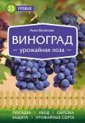 Виноград. Урожайная лоза