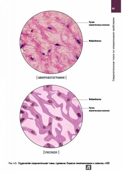 Гистология в картинках и схемах