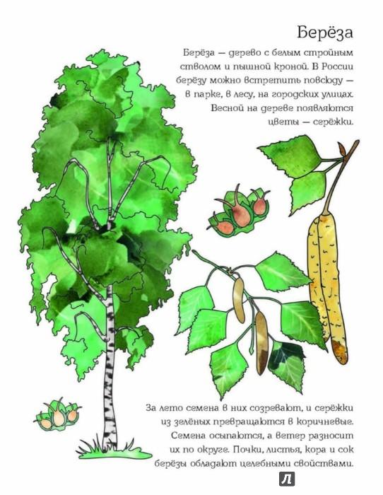 Иллюстрация 1 из 28 для Мой первый гербарий. Цветы и листья. ФГОС   Лабиринт - книги. Источник: Лабиринт