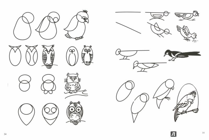 Иллюстрация 1 из 25 для Рисуем животных по алгоритмическим схемам. 5-7 лет. Методическое пособие. ФГОС - Нелли Шайдурова | Лабиринт - книги. Источник: Лабиринт