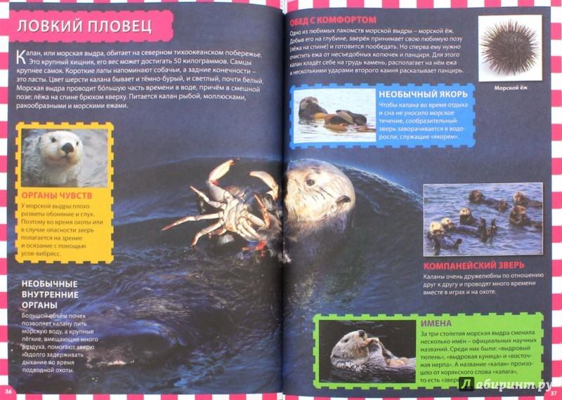Иллюстрация 1 из 12 для Животные мира | Лабиринт - книги. Источник: Лабиринт