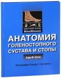 Анатомия голеностопного сустава и стопы