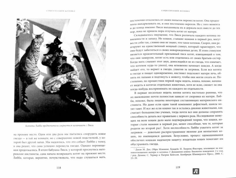 Иллюстрация 1 из 7 для Тайная жизнь кошки. Как понять истинную природу питомца и стать для него лучшим другом - Джон Брэдшоу   Лабиринт - книги. Источник: Лабиринт