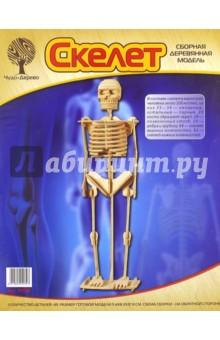 Скелет человека (P076)
