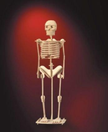 Иллюстрация 1 из 16 для Скелет человека | Лабиринт - игрушки. Источник: Лабиринт