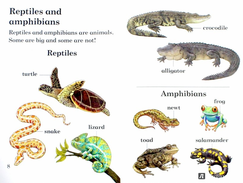 classifications of snakes and reptiles biology essay Reptile classification today, scientists classify reptiles into four major groups known as orders snakes - squamata order / serpentes suborder few animals inspire such mixed emotion as snakes it seems people either love them or hate them.